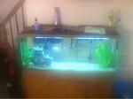 community tank