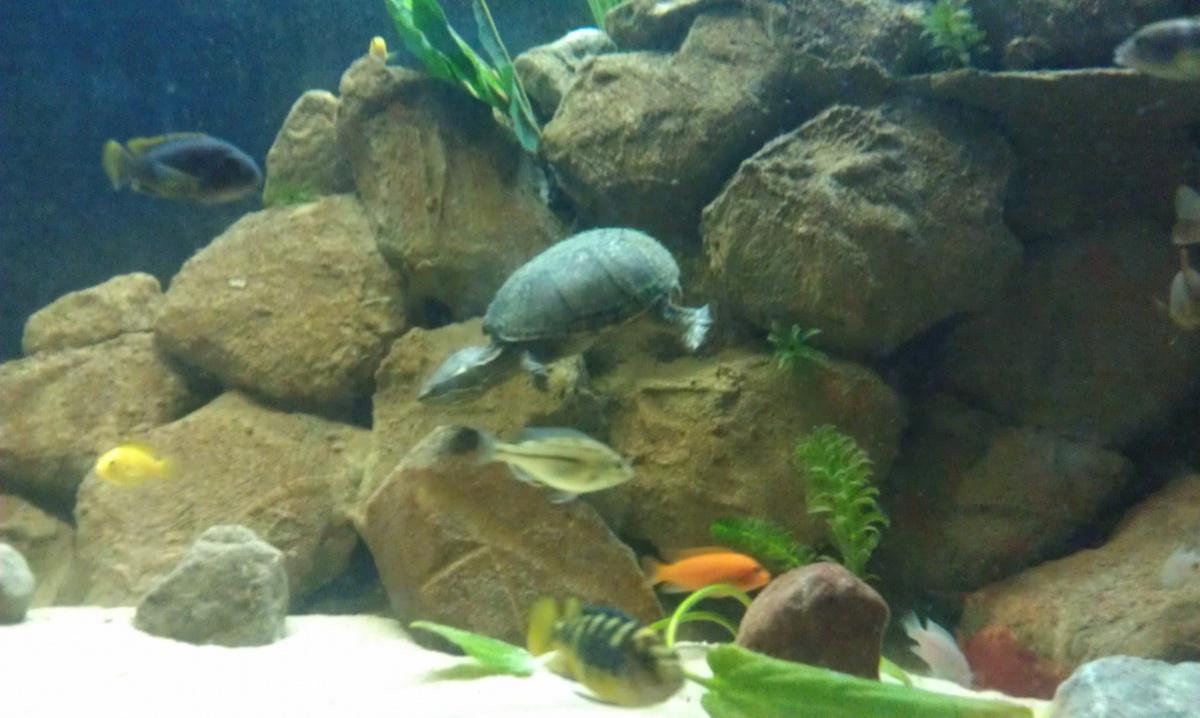 Favorit Turtle Pictures - Aquarium Advice - Aquarium Forum Community