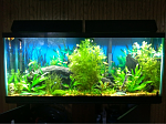 Mid June '12 I added some red ludwigia in hope of getting some color in the tank. I also added my DIY CO2 to try and boost the color.  The water...