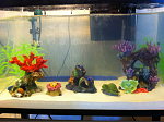 My fresh water tanks