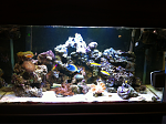 First attempt at saltwater tank