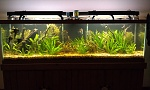 Angelfish Tank