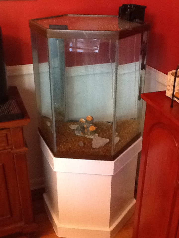 Scored a 35 gallon hex tank on craigslist aquarium for Fish tanks craigslist