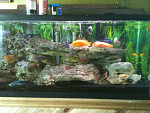 My Good lookin fish
