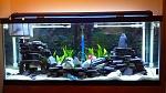 75g African aquarium