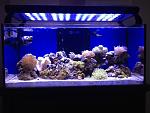 40gal reef