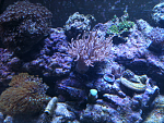 My 75 gallon reef tank