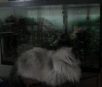 Cat..........fish