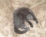 Jack's  favorite way to sleep.