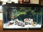 My new fish tank