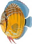 cartoon fish discus