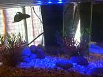 My tanks(: