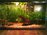 10 gallon freshwater tank