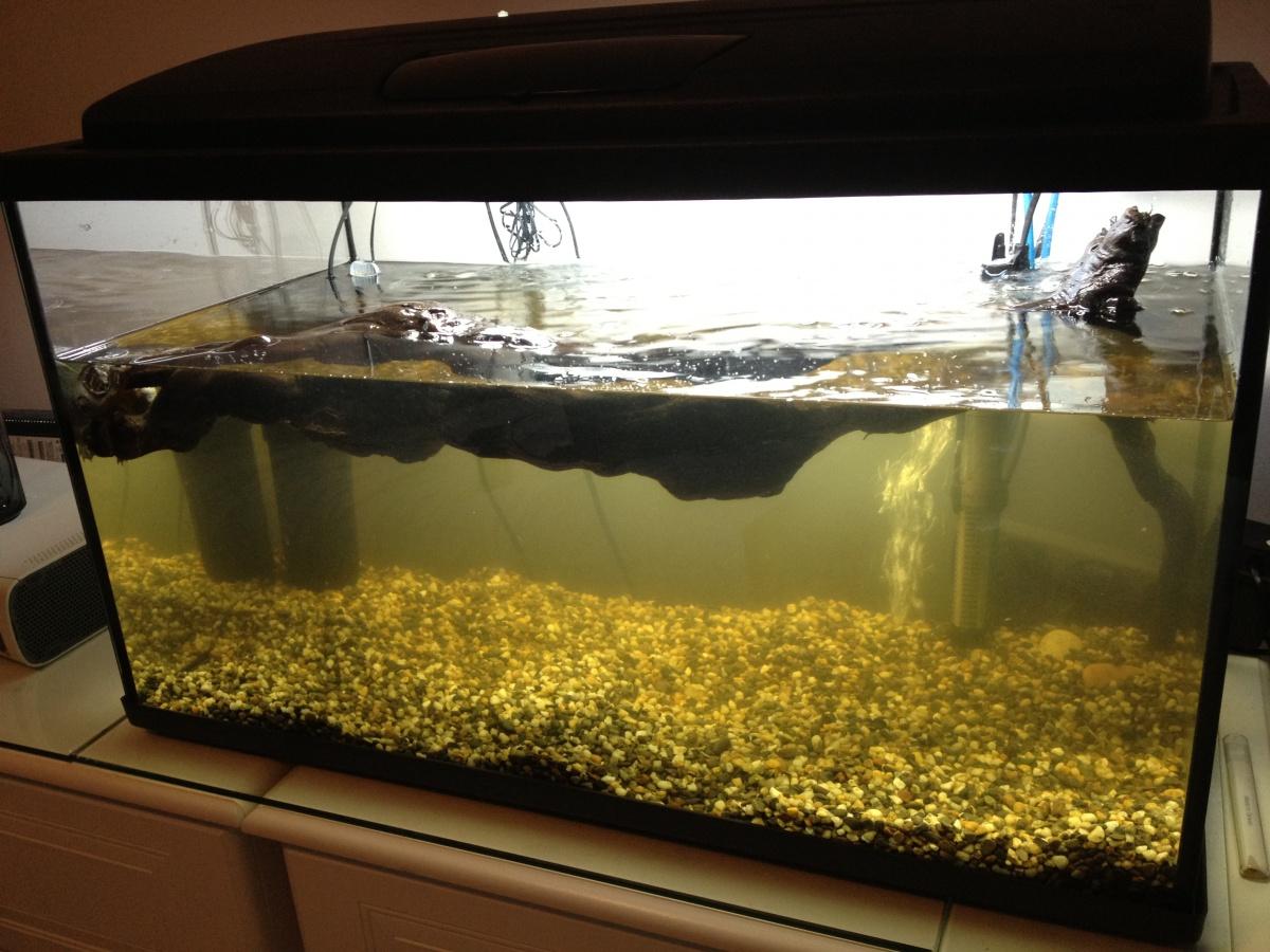 ... Aquarium Forum Community - Filths Album: 100 Liter (Musk Turtle) Tank
