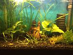 10 gal shrimp tank, LED light