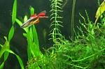 Fish in my tank