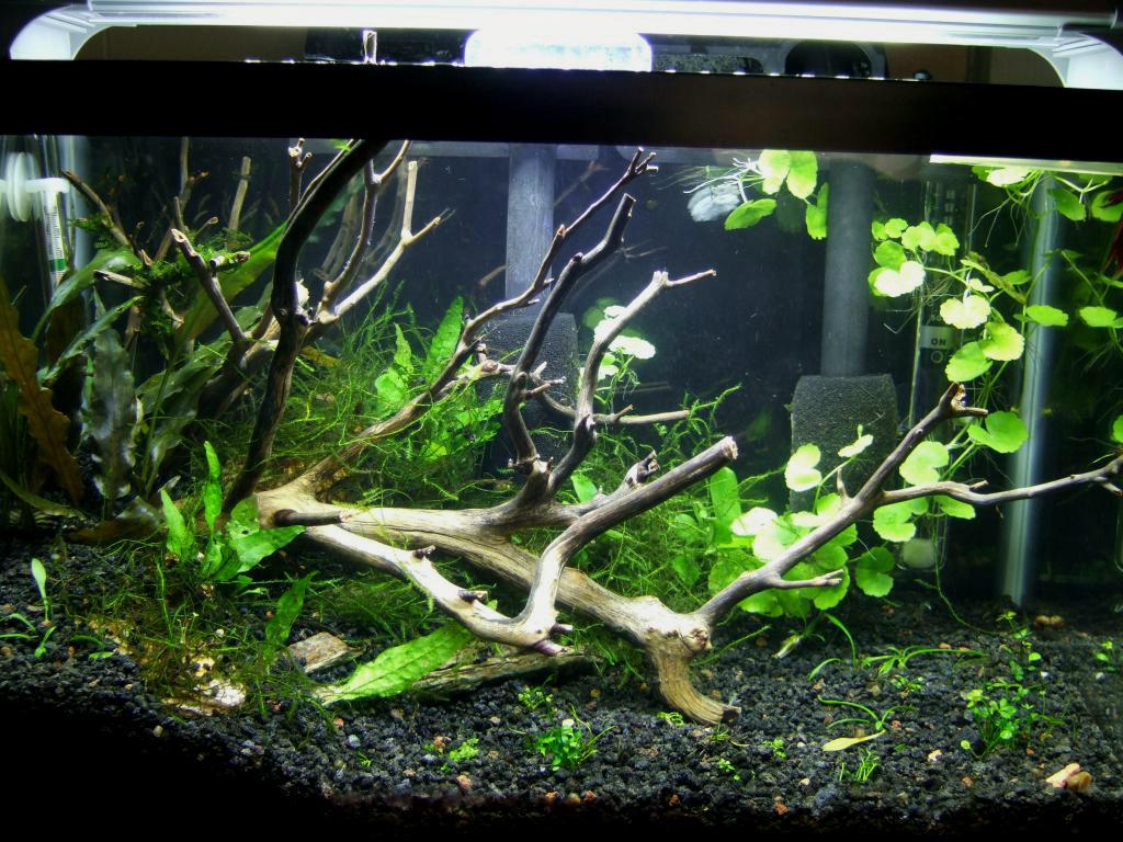 For Sale Manzanita Driftwood Buy 2 Get 1 Free Ship Pu C Aquarium Advice
