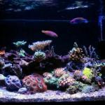 40 Gallon Reef Tank