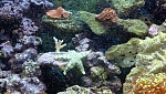 My 29G Reef