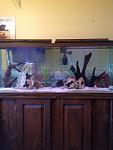 Fish tank 55