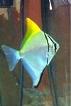 Current abd past fish of mine