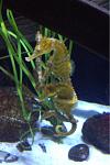 Mystic aquarium (mystic CT)