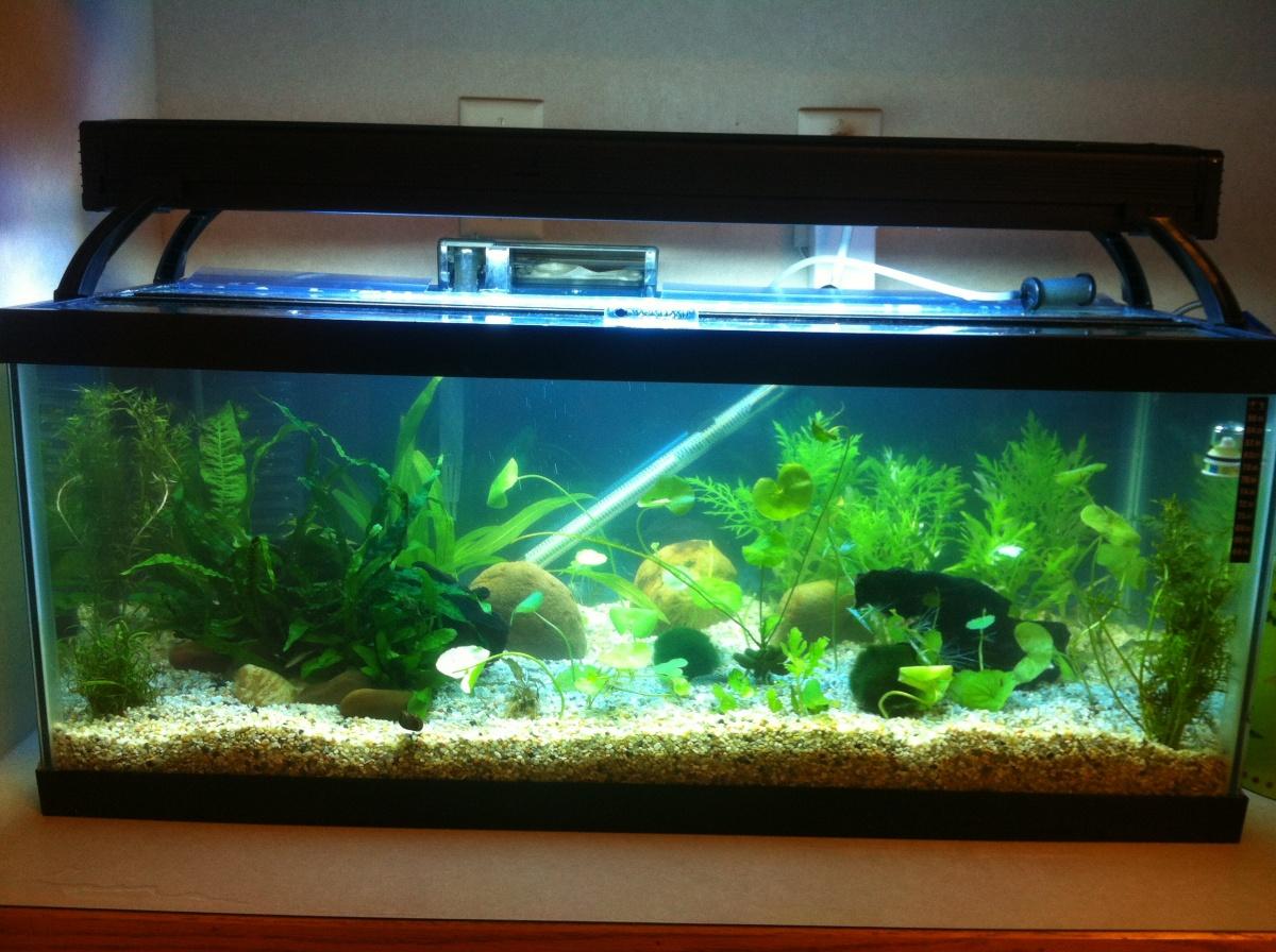 20 gallon fish tank jeep wrangler gallon fish tank for 125 gallon fish tank