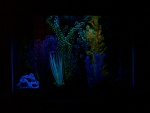 Glow Tank/ Night light