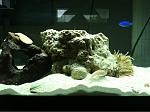 Nano Reef 20