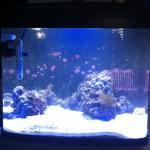 Kate's Ocean: 29gal Biocube Build