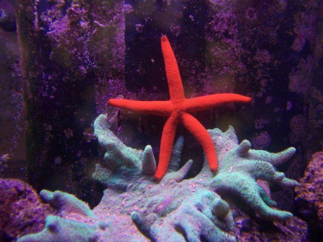 Actually Reef Safe Starfish And Crabs Aquarium Advice