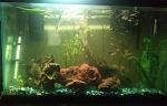 29 Gal. Freshwater planted guppy tank