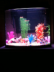 My freshwater tank!