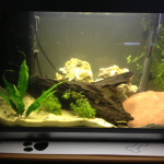 Added black sand and new plants!