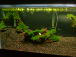 Left side with Malaysian DW and unknown moss