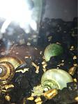My snails