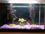 My Freshwater Tanks
