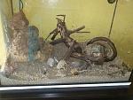 my crabtank :)