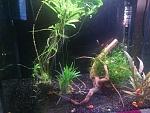 my nano shrimp and snail tank