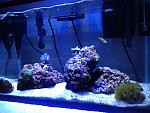 10 Gallon Nano Reef