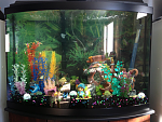 36 Gallon Bow Front