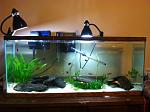 55 gallon freshwater