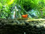 My nano fish