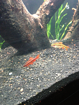 My fishes