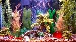 Rainbowfish Tank