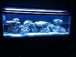 My 70 Gallon Reef Aquarium