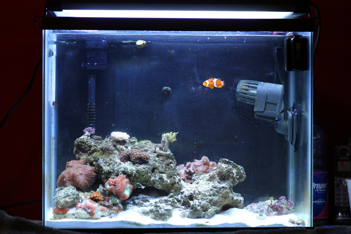 Saltwater aquarium 20 gallon 20 gallon reef aquarium for 20 gallon saltwater fish tank