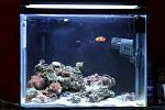 Nano Reef: 20 gallon