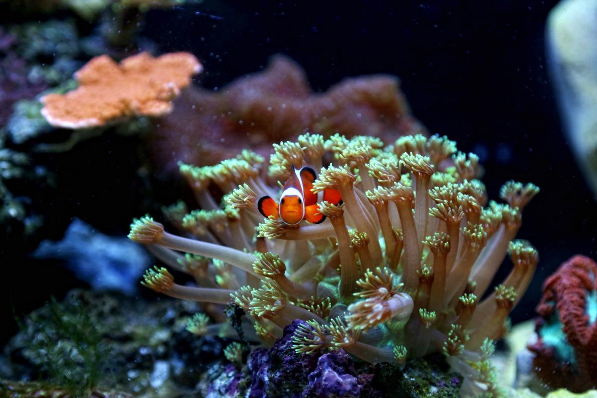 Aquarium advice aquarium forum community evansimp 39 s for Nano saltwater fish
