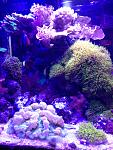 25 gallon mixed reef